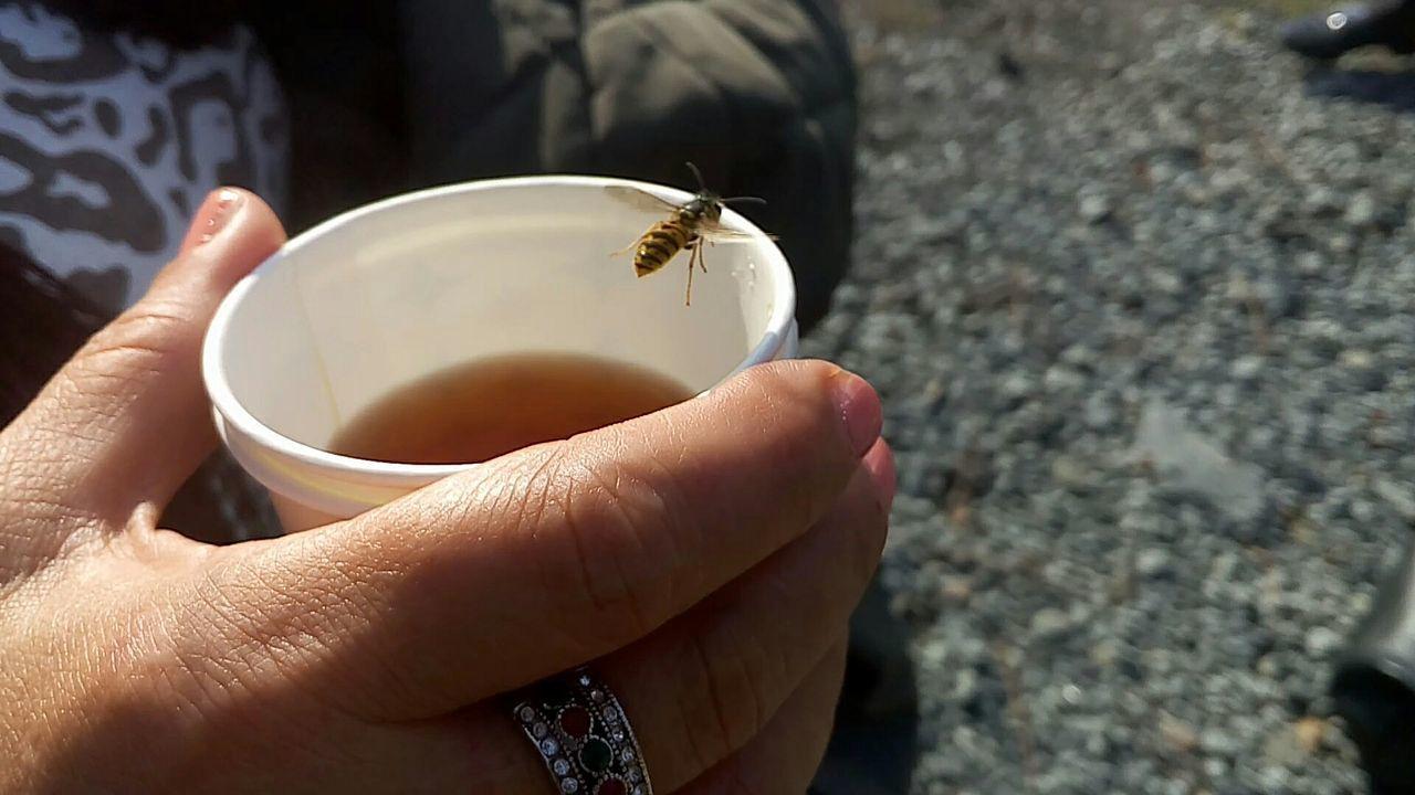 😚 Bee 🐝 Arı 🐝 Çay ☕ Tea ☕ Hand ✋ El ✋ Ring 😍 Yüzük 💍 İstanbul