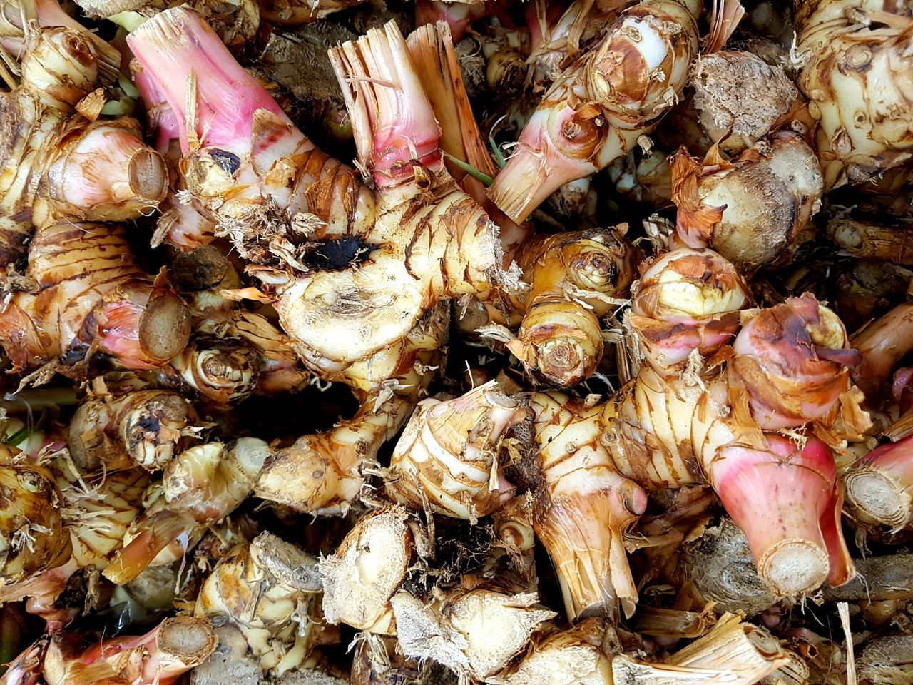 Nature Ginger Still Life Close-up Vegetable Freshness Food Full Frame Plants Agricultural Agriculture Agronomy