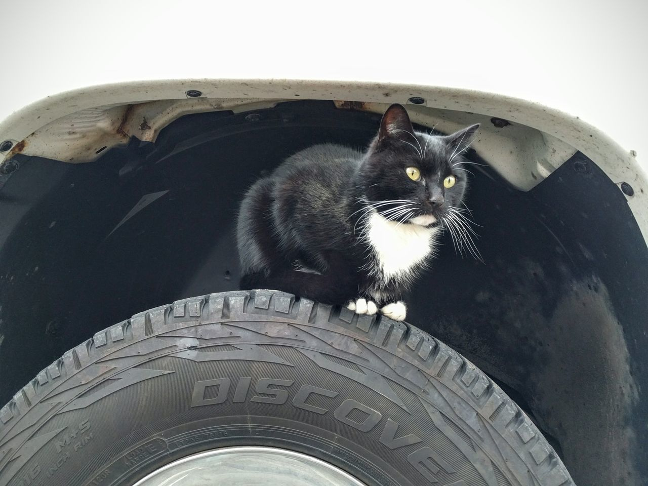 BLackCat Cat Wheelwell Truck Truck Tire Black And White And Color Relaxing Check This Out Hanging Out Enjoying Life