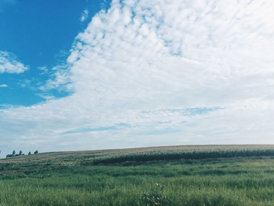 Landscape Field Nature Grass Sky Growth Beauty In Nature Agriculture No People Scenics Outdoors Day