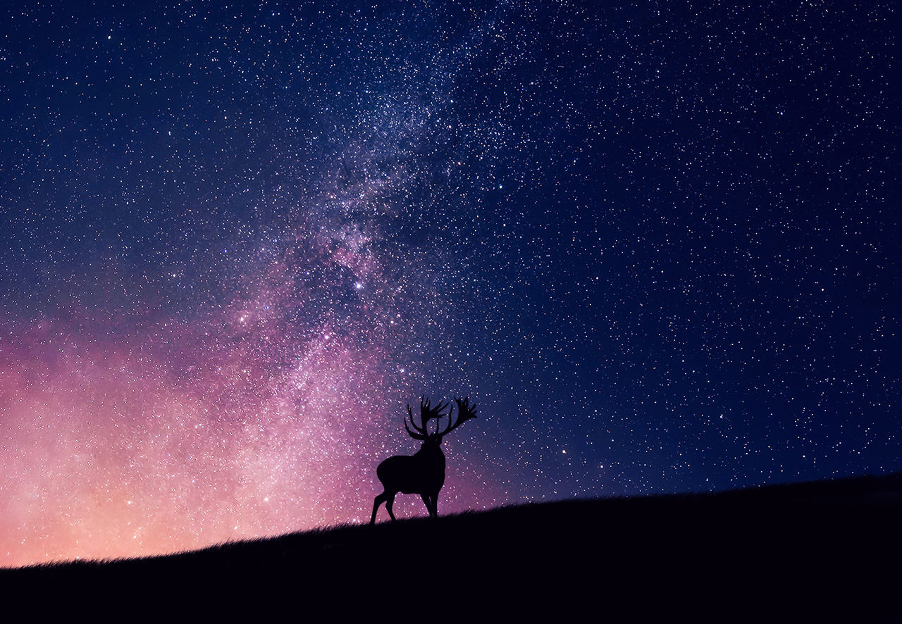 Night's watch Animal Themes Backgrounds Close-up Curtain Deer Detail Extreme Close Up Full Frame Glowing Hobbies Home Interior Indoors  Light Music Night One Animal Part Of Recreational Pursuit RISK Selective Focus Silhouette Star Studio Shot Textured  Wet