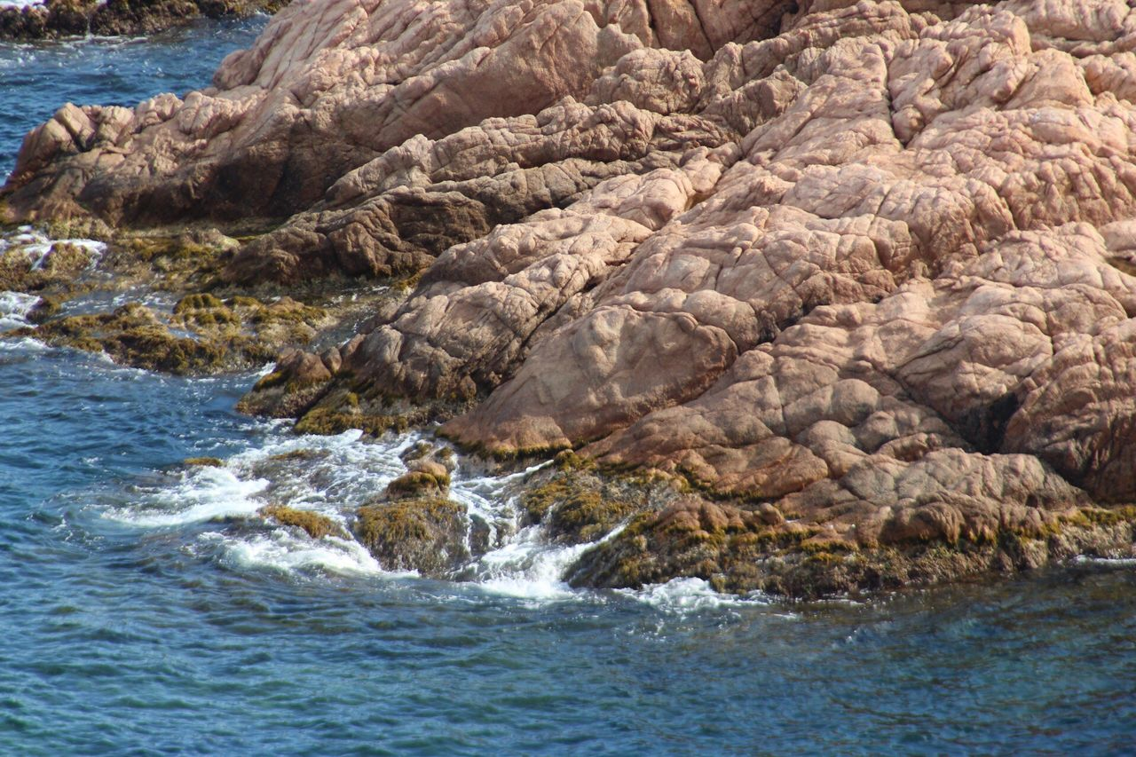 sea, nature, no people, rock - object, water, animals in the wild, day, outdoors, beauty in nature, animal themes, wave, large group of animals, mammal