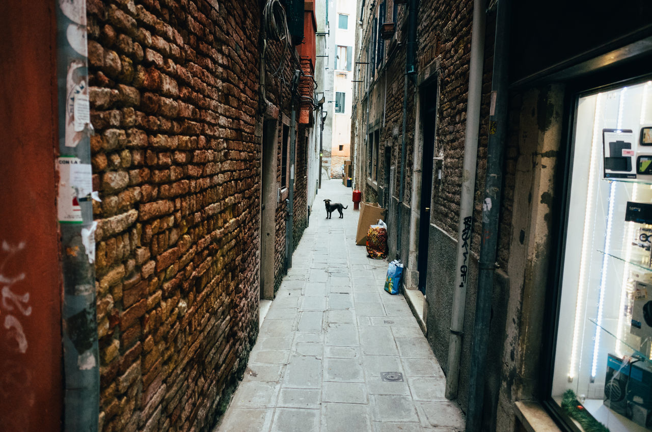 Dog On Alley Amidst Buildings