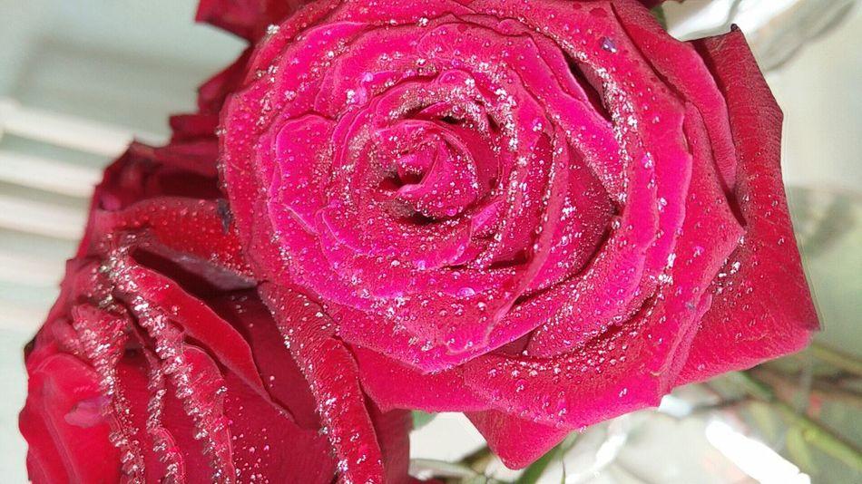 Rosas Bonitas❤️🌹 Lluvias