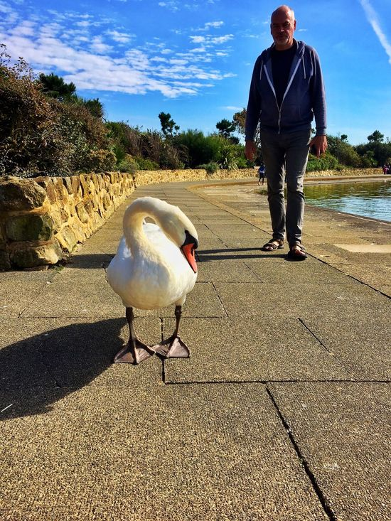 Swan is saying (hey) who's that behind me ?? Animal Themes Bird Animals In The Wild Real People Casual Clothing Day One Person Retaining Wall Sunlight Full Length Outdoors Animal Wildlife Lifestyles Leisure Activity Nature Shadow Water Sky