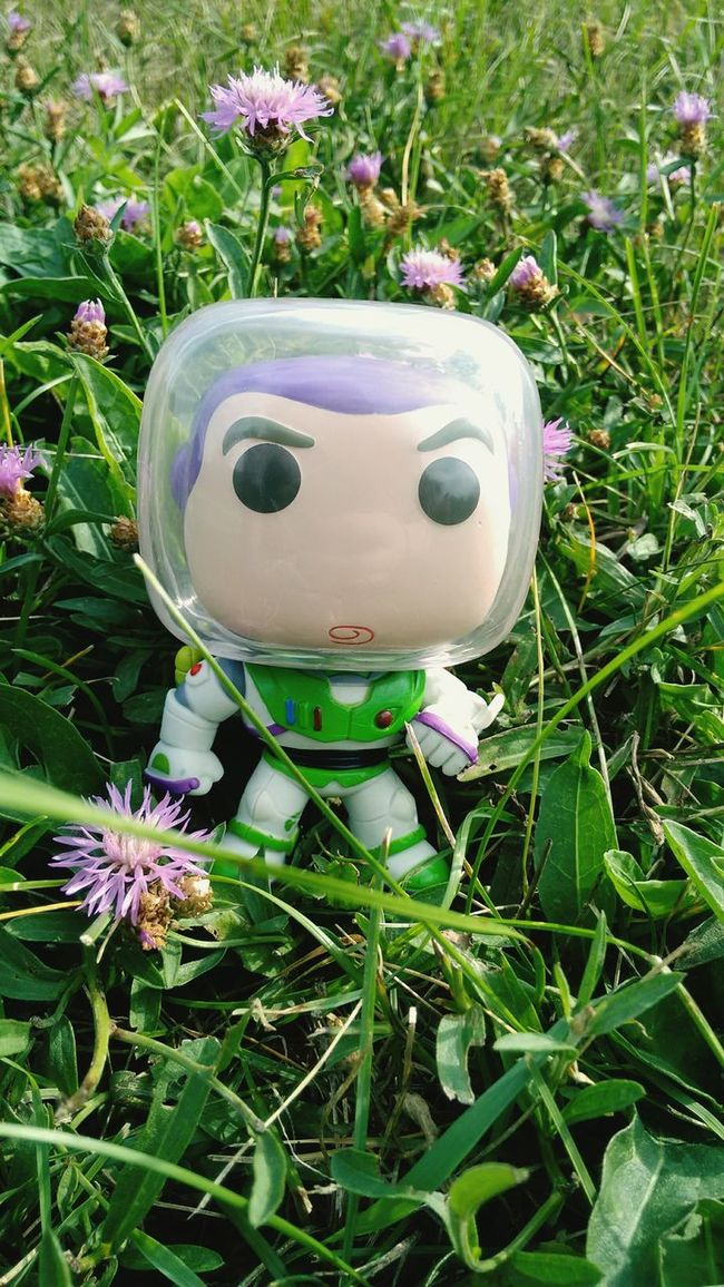 Flower Fragility Freshness Growth Plant Blooming Close-up Petal Beauty In Nature Green Color Day Nature Pink Color Outdoors In Bloom Flower Head Funkopopvinyl Eyem Best Shots Buzzlightyear Toystory Colorful Still Life Full Frame Closeup Front View