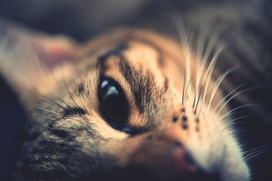 Beautiful stock photos of cat, Animal, Animal Body Part, Animal Eye, Animal Themes