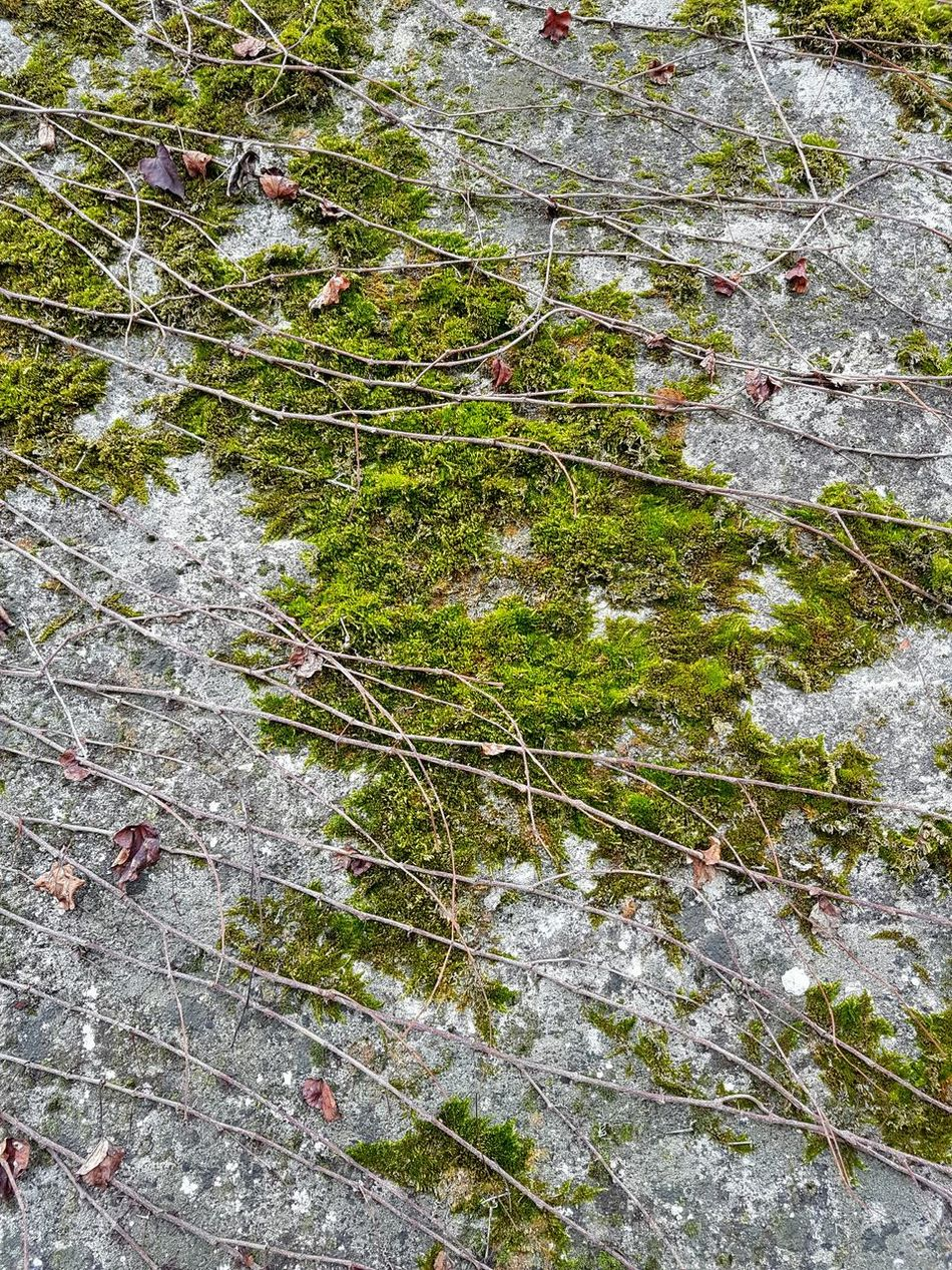 Backgrounds Full Frame No People High Angle View Green Color Close-up Outdoors Growth Day Grass Nature Pattern, Texture, Shape And Form Natural Textures Textures And Surfaces Outdoor Freshness Green And Stone Lychen Textures In Nature EyeEmNewHere Moss-covered Moss