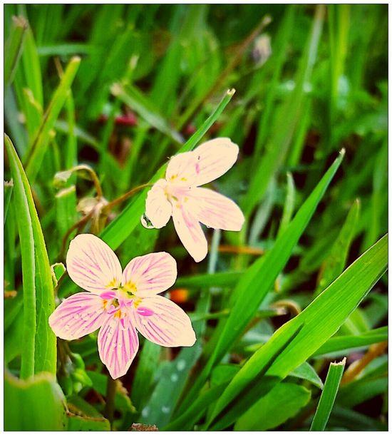 The Littlest Things ? Inspiration EyeEm Best Shots Nature Flower