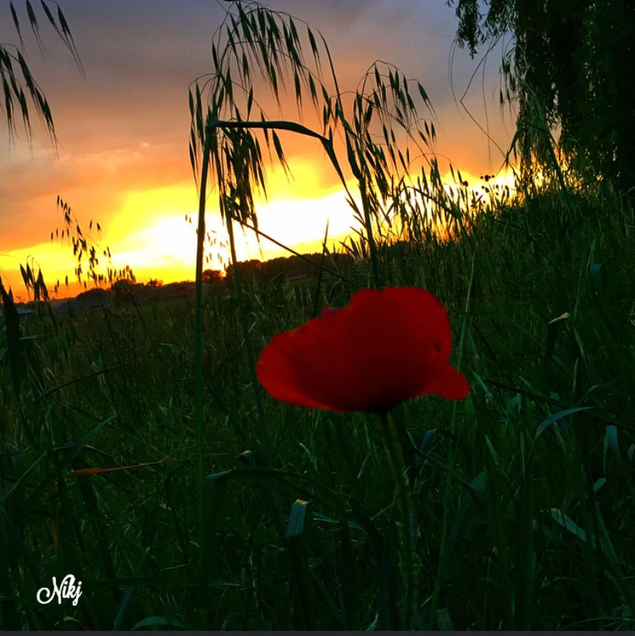 http://youtu.be/qSeHSz_SQj8 ------------------------------------ 🎶vedrai, vedrai vedrai che cambierà forse non sarà domani ma un bel giorno cambierà vedrai, vedrai no, non son finito sai non so dirti come e quando ma un bel giorno cambierà....🎶 Luigi Tenco Sunset #sun #clouds #skylovers #sky #nature #beautifulinnature #naturalbeauty #photography #landscape Sunset #sun #clouds #skylovers #sky #nature #beautifulinnature #naturalbeauty Photography Landscape ? Flowers,Plants & Garden Tramonti__italiani Particolaristupendi