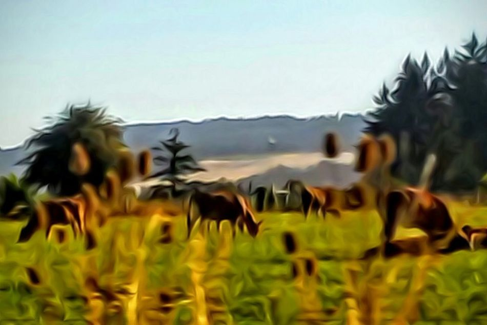 Color Palette Colour Of Life Re Edited Pivotal Ideas Willamette Valley Vegitation Nature_collection Animals Mad Cows