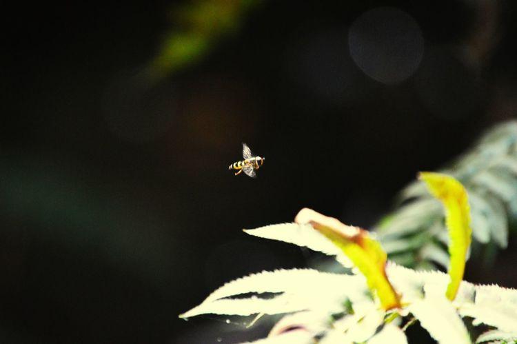Buzz? Muir Forest Nature Bee