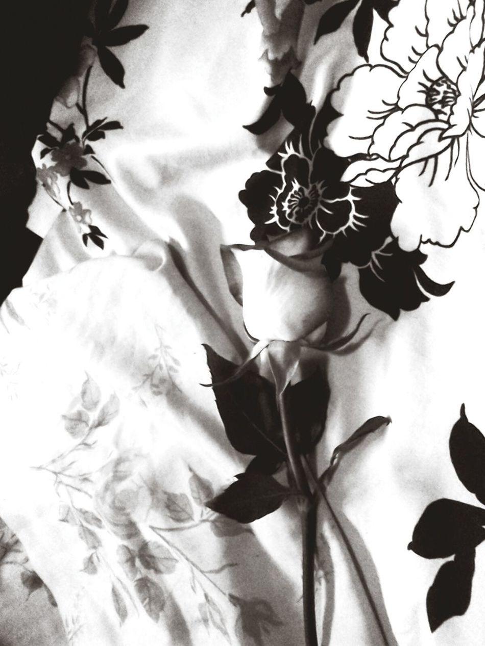 Ownphotography Bestoftheday Amazing Beauty EyeEmbestshots Eyeemflowercollection Eyeemflowerlover Flowerperfection Blackandwhitephotography Confidence Is Key ! Pretty♡ Just Perfectly Perfect Beautiful Flowers Gorgeous ♥ Black And White Portrait Unique Beauty