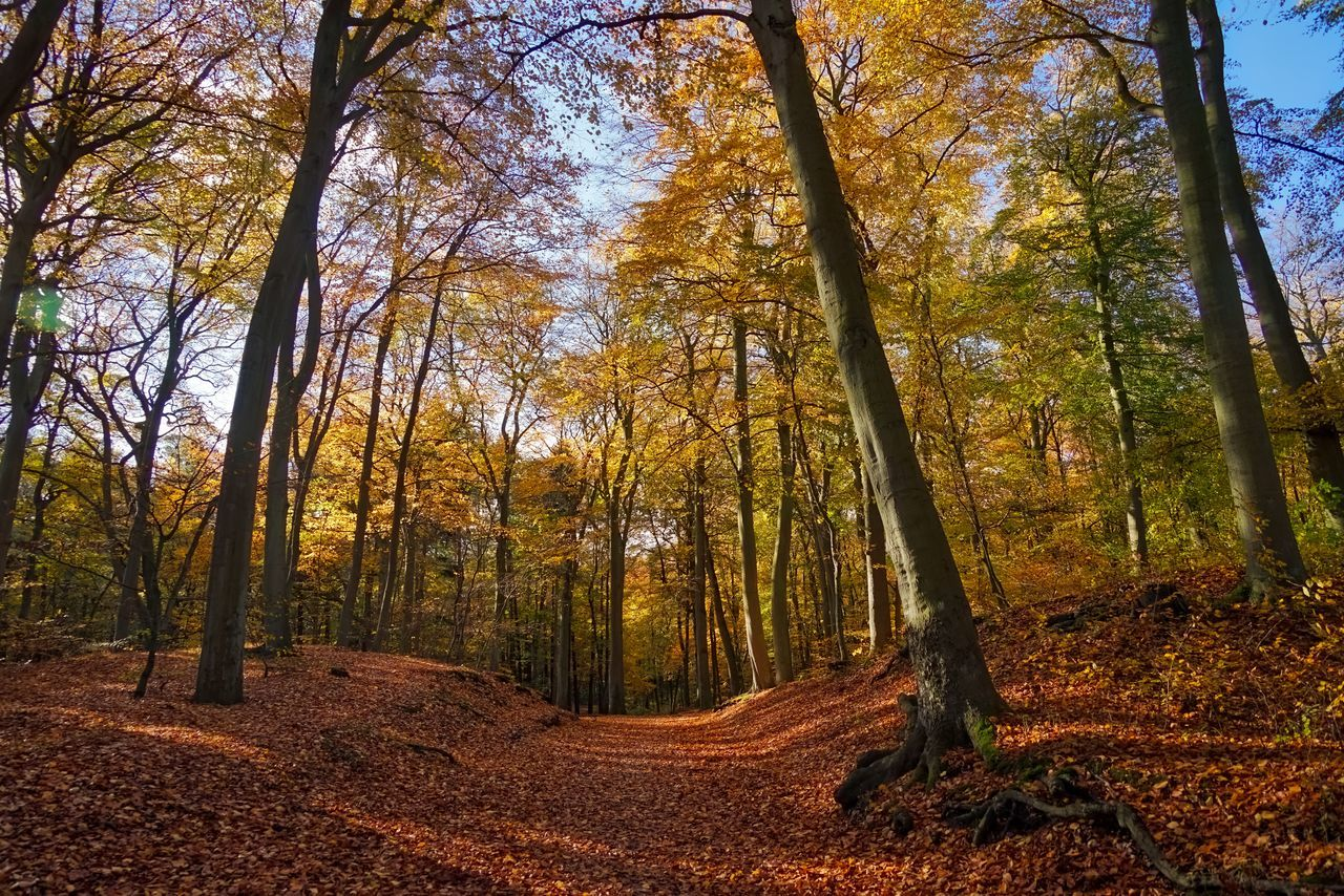 Autumn Leafes Nature Photography No People Trees