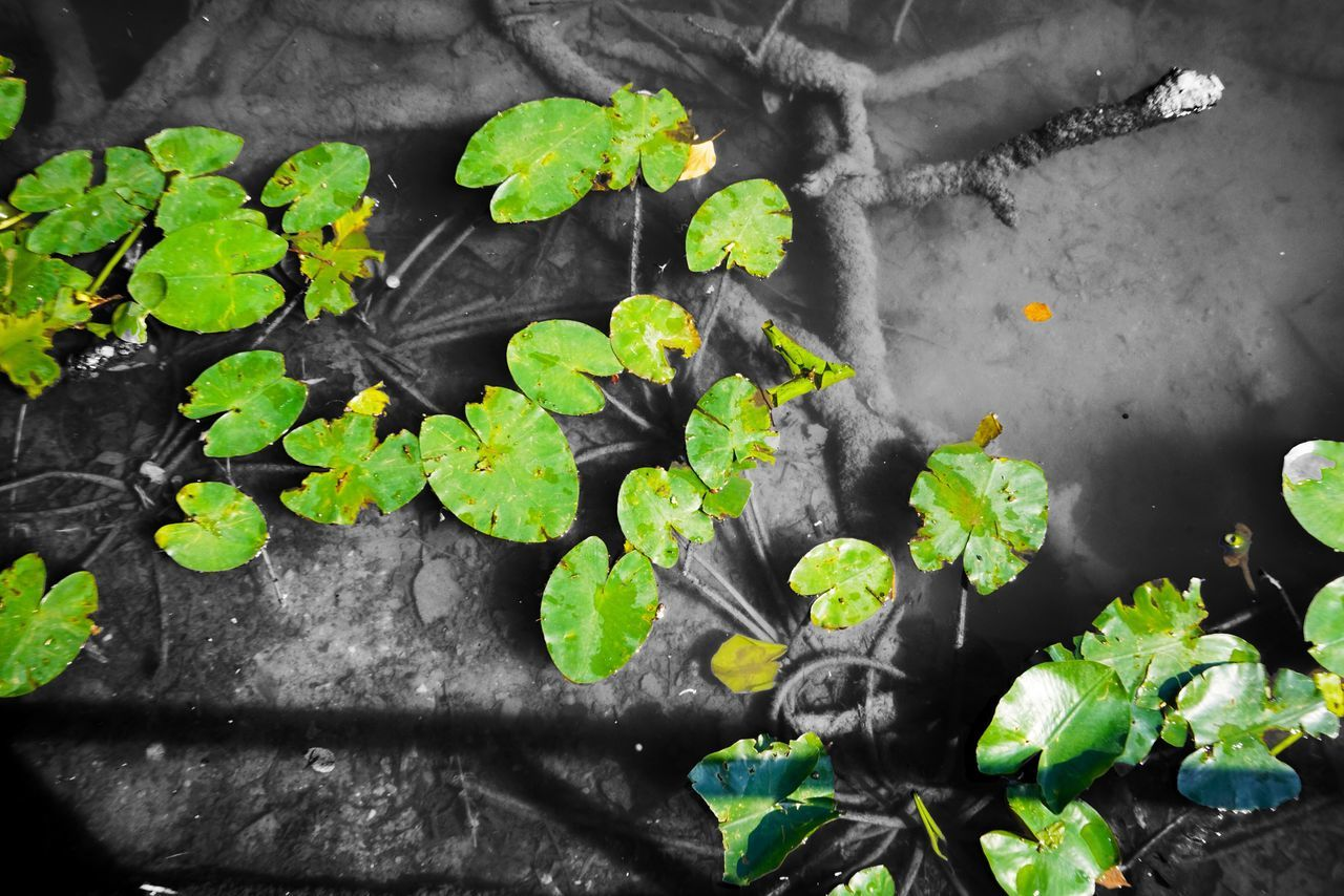 Leaf Plant Growth No People Close-up Freshness Day Nature Outdoors