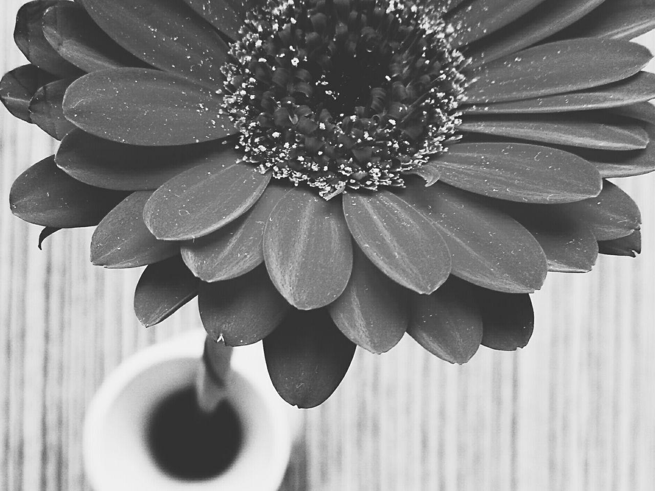 Flower Flower Head Beauty In Nature VSCO Taking Photos Vscocam Still Life Eye4photography  Mobilephotography HuaweiP9 Black&white Blackandwhite Blacknwhite Black & White Flowerporn Close-up Black And White Nature