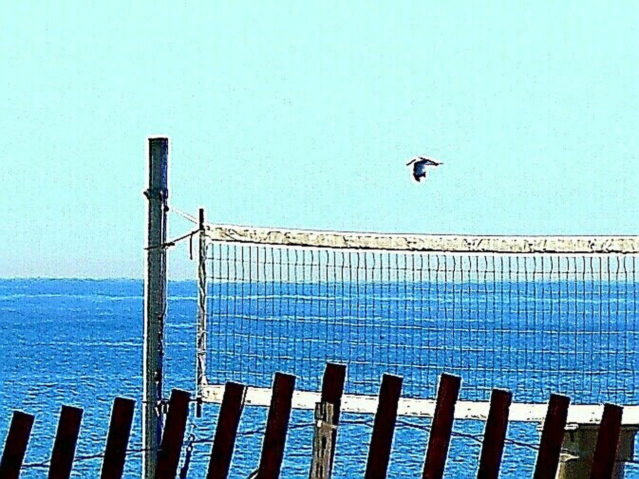 Bird Netting Outdoors Sea Clear Sky No People Beach EyeEm Gallery The Week On Eyem EyeEm Best Shots