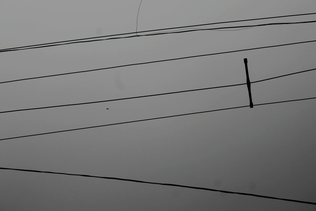 cable, connection, power line, power supply, low angle view, electricity, no people, outdoors, bird, fuel and power generation, technology, clear sky, electricity pylon, nature, day, telephone line, perching, sky, animal themes