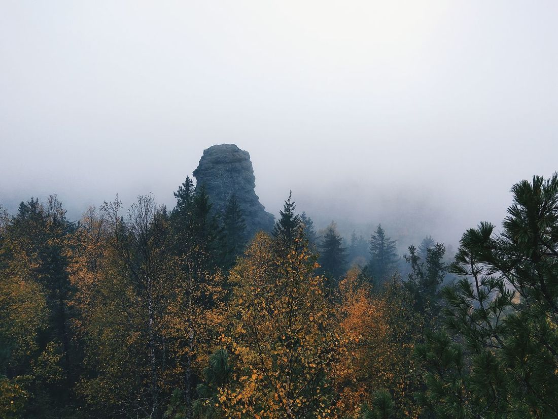 Fog Tree Sky Nature