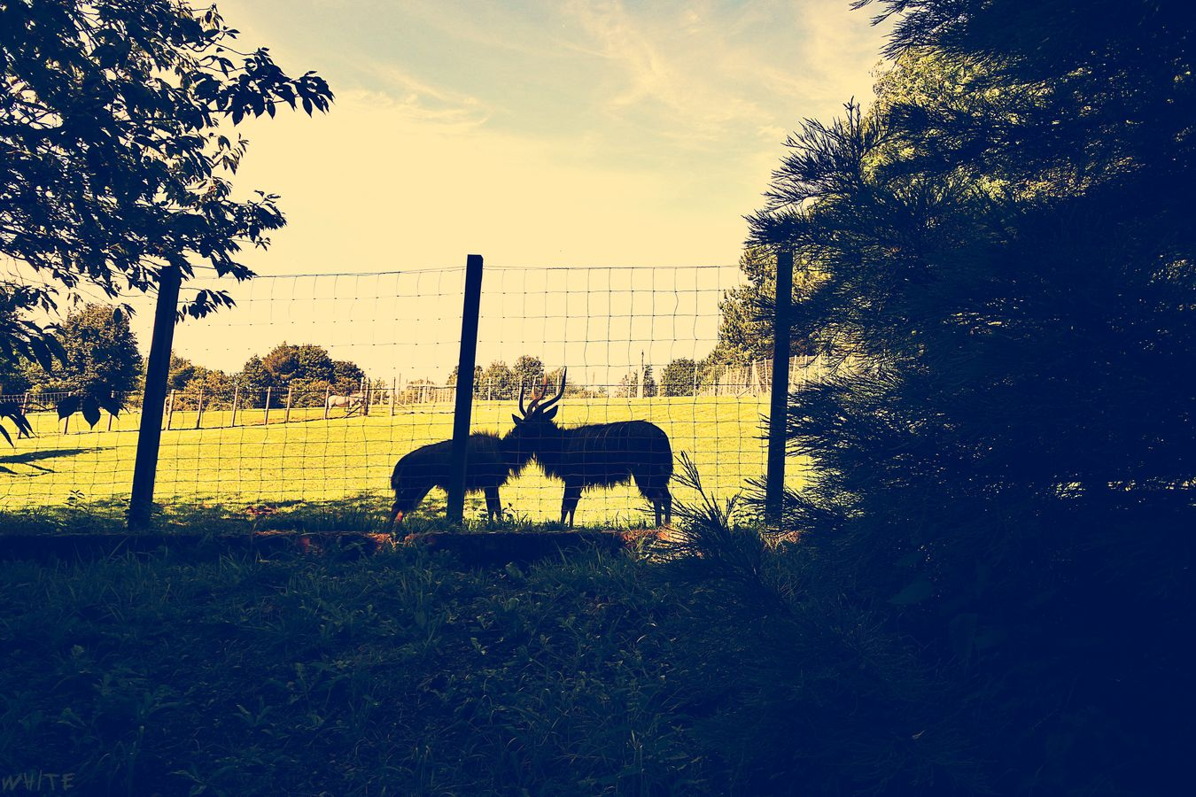 Animal Love Animal Themes Beauty In Nature Field Love Nature Silhouette Sky Tranquility White Travels