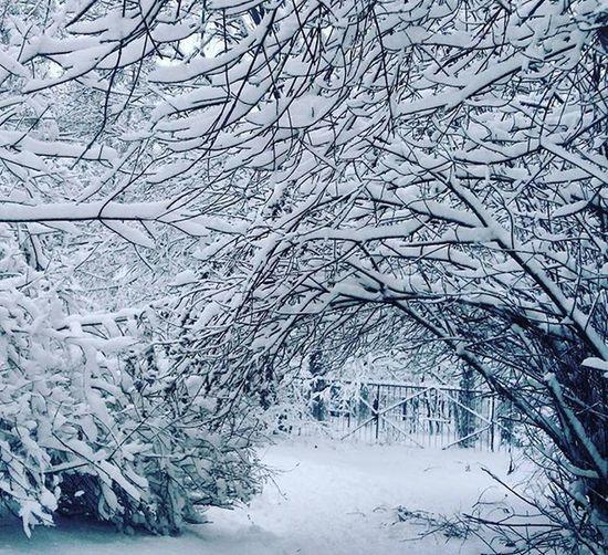 😔трудный сегодня выдался денёк - только эта сказочная красота радует !)) ❄🌌🙈 P.s: В сущности , причин для плохого настроения у нас много - просто каждый день они разные . снег зимапришла сказка зимняясказка Новосибирск Nsk_Inst Winter Sibir Instagram_nsk Nsk_love