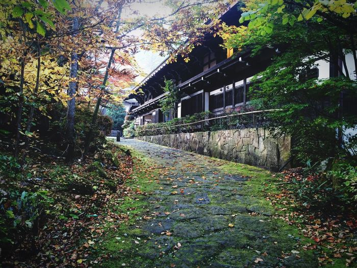 Checking In Nature Autumn Autumn Leaves Onsen Architecture Traditional Traveling