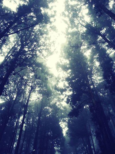 雲霧繚繞~好舒服歐~:)