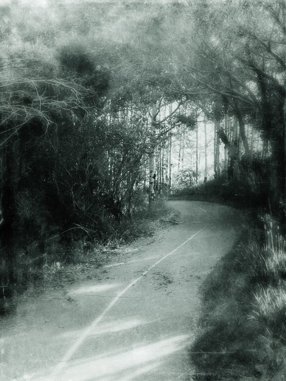 tree, road, the way forward, forest, no people, day, outdoors, nature, landscape