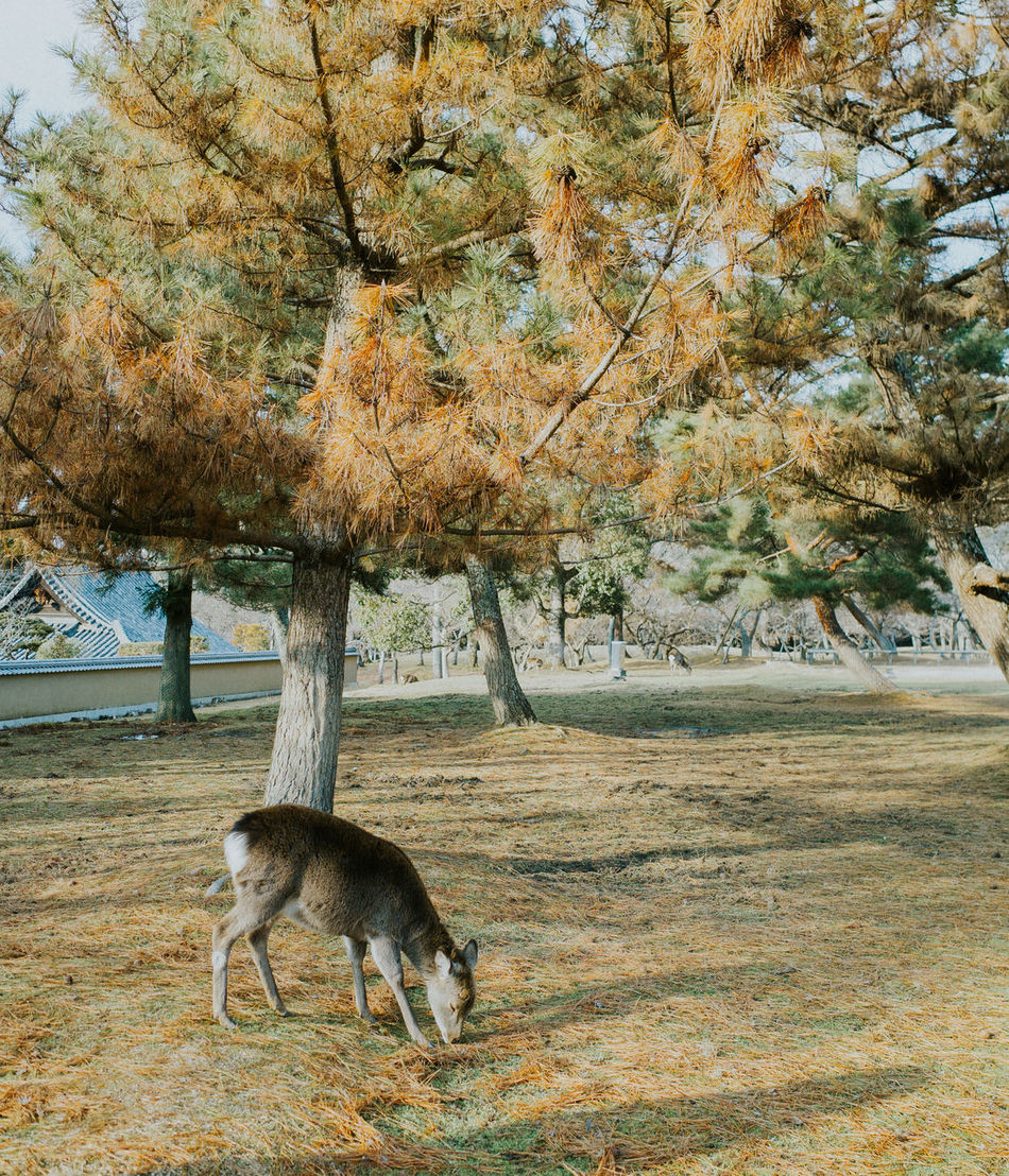 Animal Themes Animal Wildlife Animals In The Wild Beauty In Nature Day Domestic Animals Mammal Nature No People One Animal Outdoors Pets Tree Water
