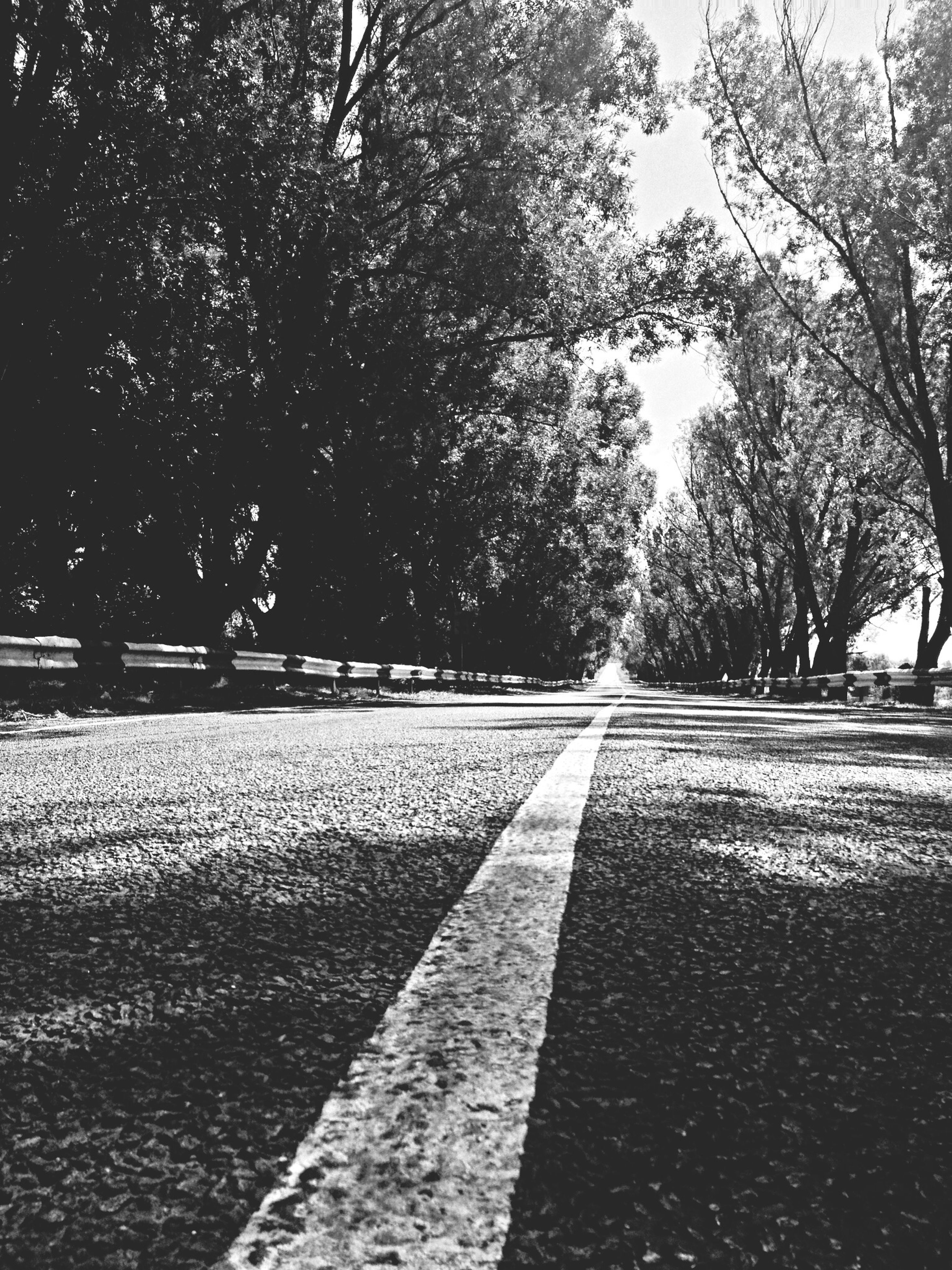 tree, the way forward, diminishing perspective, vanishing point, transportation, road, long, empty, tranquility, nature, road marking, empty road, footpath, treelined, no people, outdoors, day, park - man made space, growth, surface level