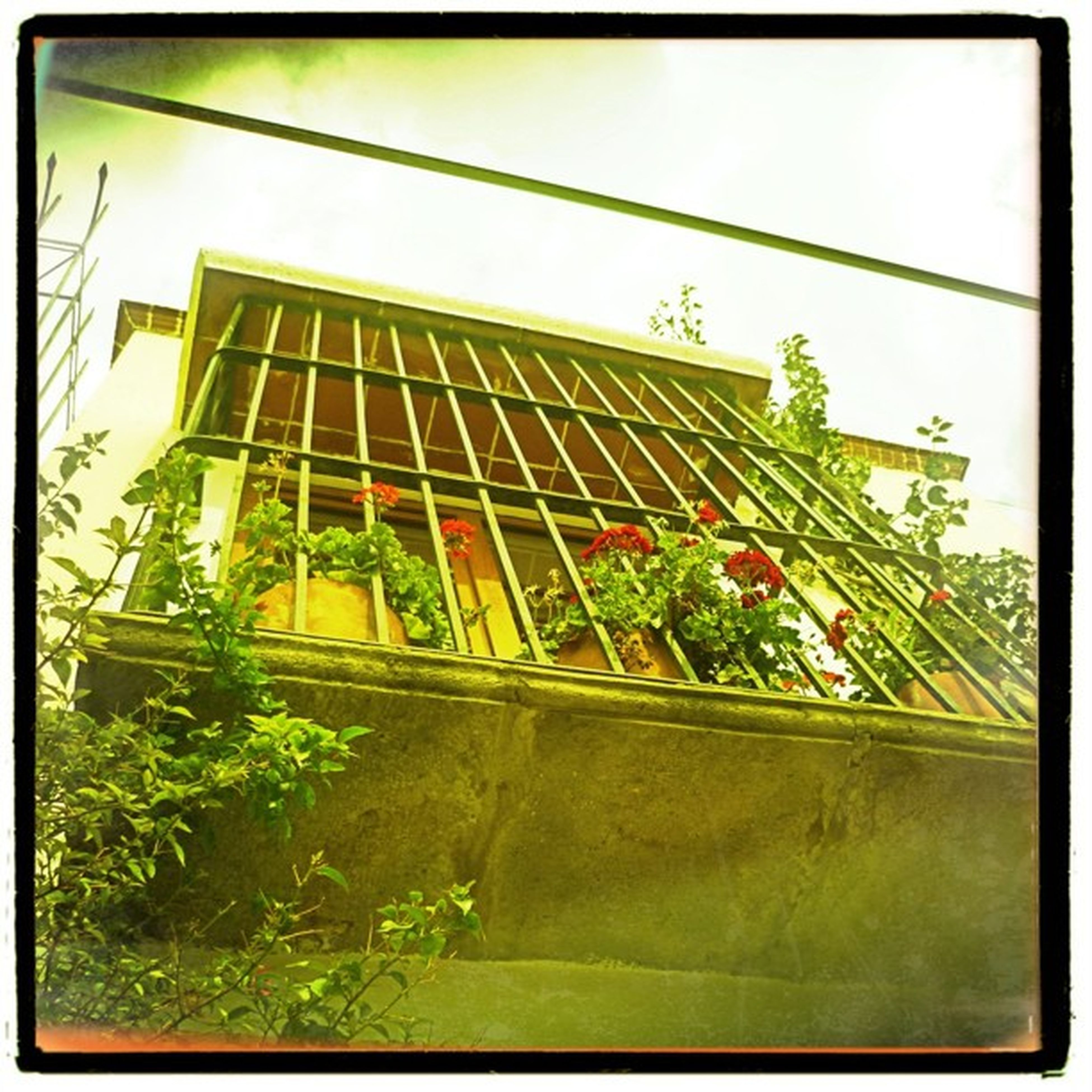 transfer print, auto post production filter, built structure, plant, growth, architecture, potted plant, flower, window, building exterior, indoors, sky, low angle view, no people, day, nature, frame, green color, glass - material