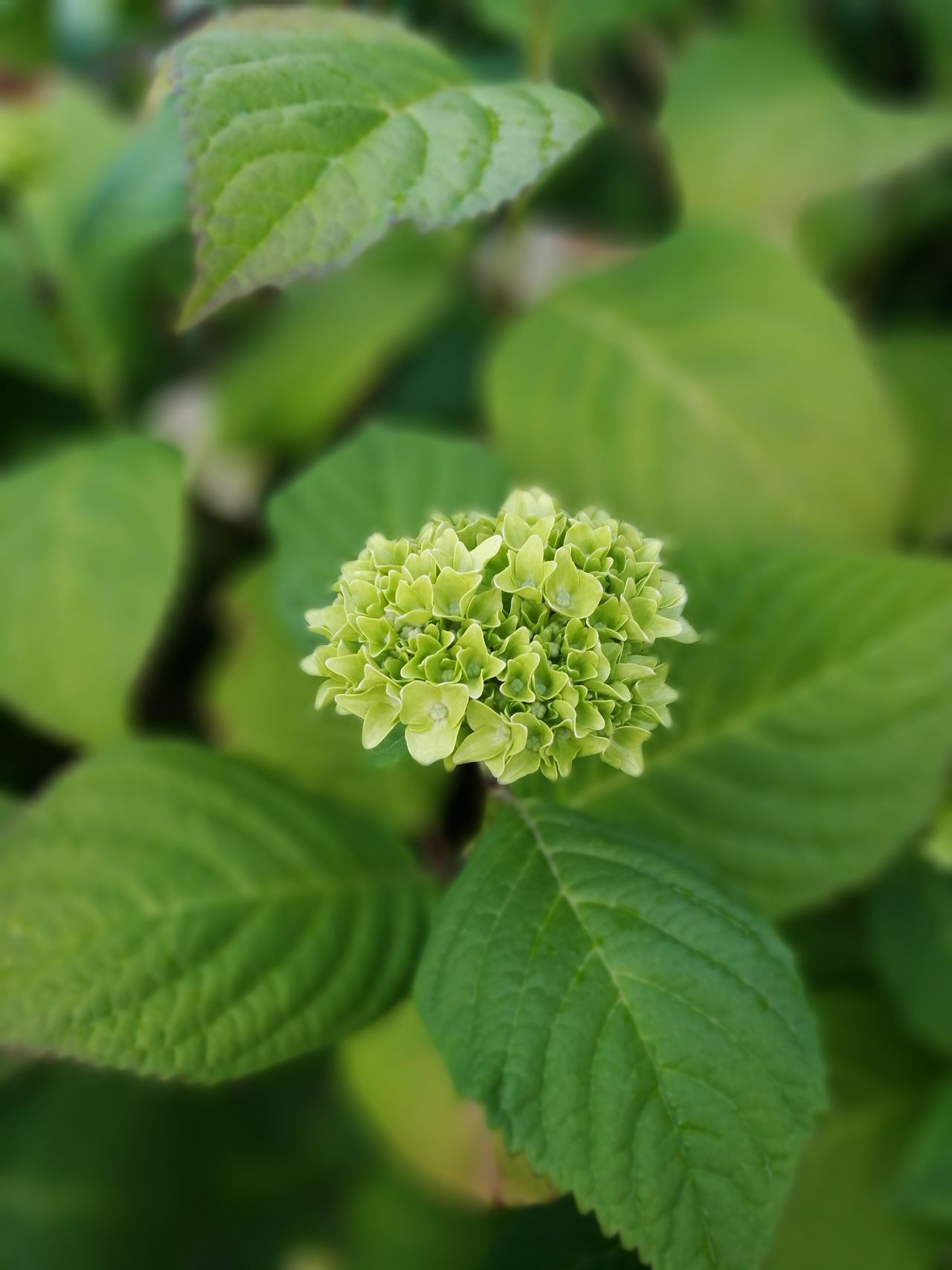 Flower Greenery Nature_collection Leaf Flowers Plants Collection Garden Garden Flowers
