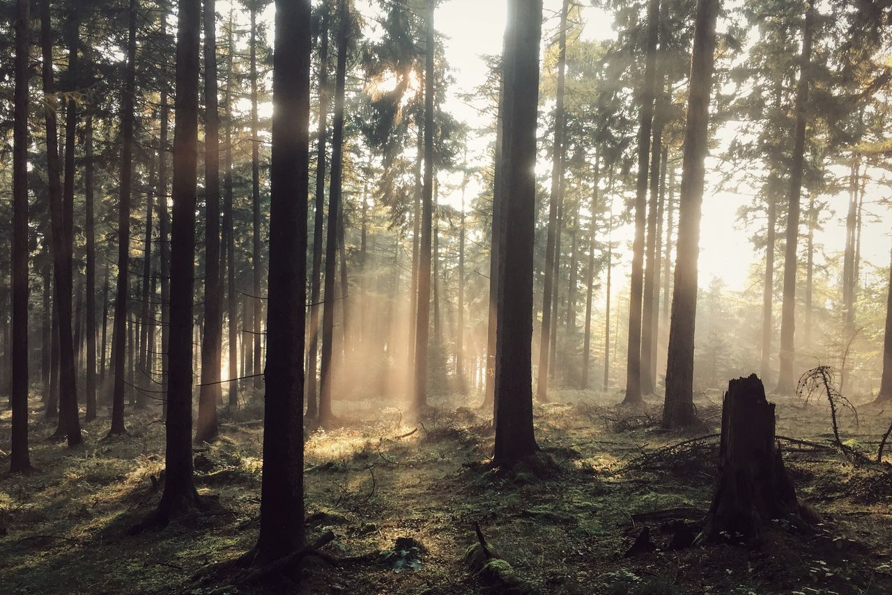 Forest Nature Outdoors Fog Hiking Wanderlust Roaming Tree WoodLand Landscape Tree Trunk Beauty In Nature