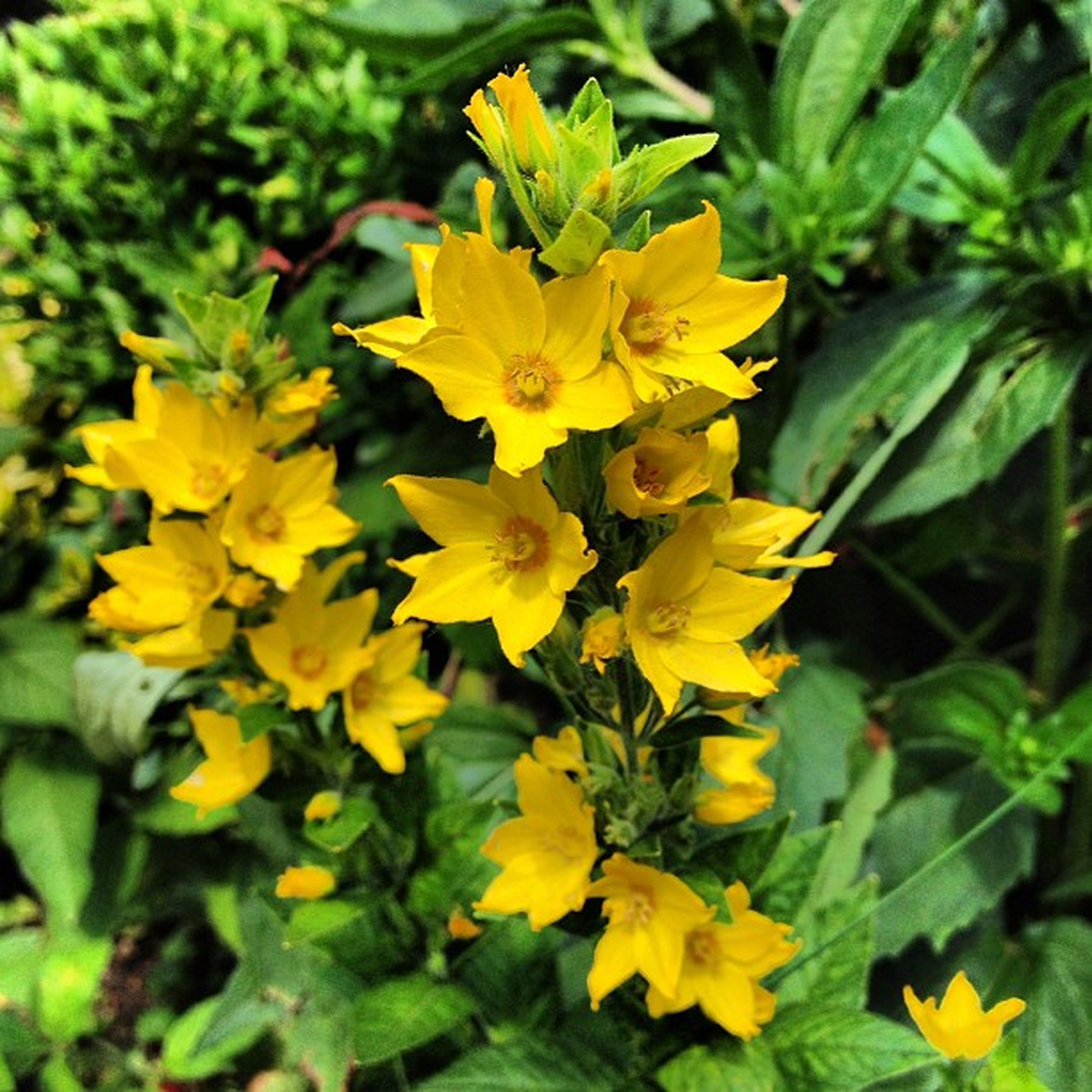 flower, yellow, freshness, petal, growth, fragility, beauty in nature, flower head, plant, blooming, nature, leaf, focus on foreground, close-up, green color, in bloom, park - man made space, blossom, day, outdoors