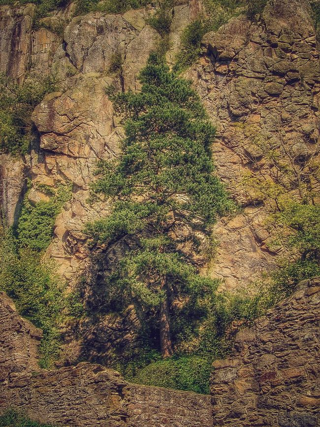Felswand Tanne Rock Nature Nature_collection Nature Photography Landscape Landscape_Collection Outdoor Photography