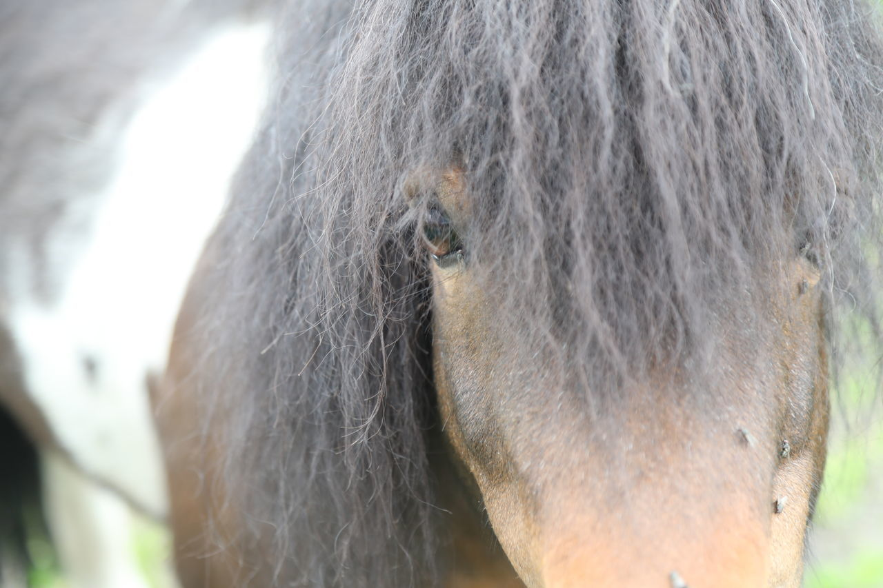 Animal Themes Close-up Day Domestic Animals Focus On Foreground Horse Livestock Mammal Mane Nature One Animal Outdoors