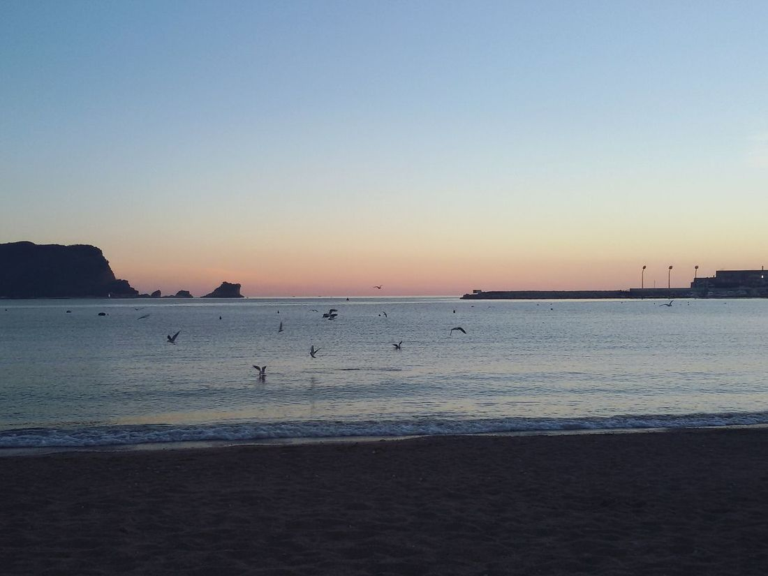 Sea Beach Sunset Montenegro🌊💙👈 Birds In Flight Nature Horizon Over Water No People Water Tranquility EyeEmNewHere