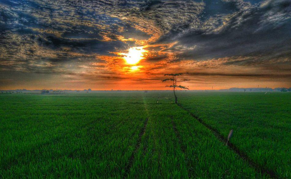 HDR Morning Sky Xperia M4 Aqua Fields Streetside