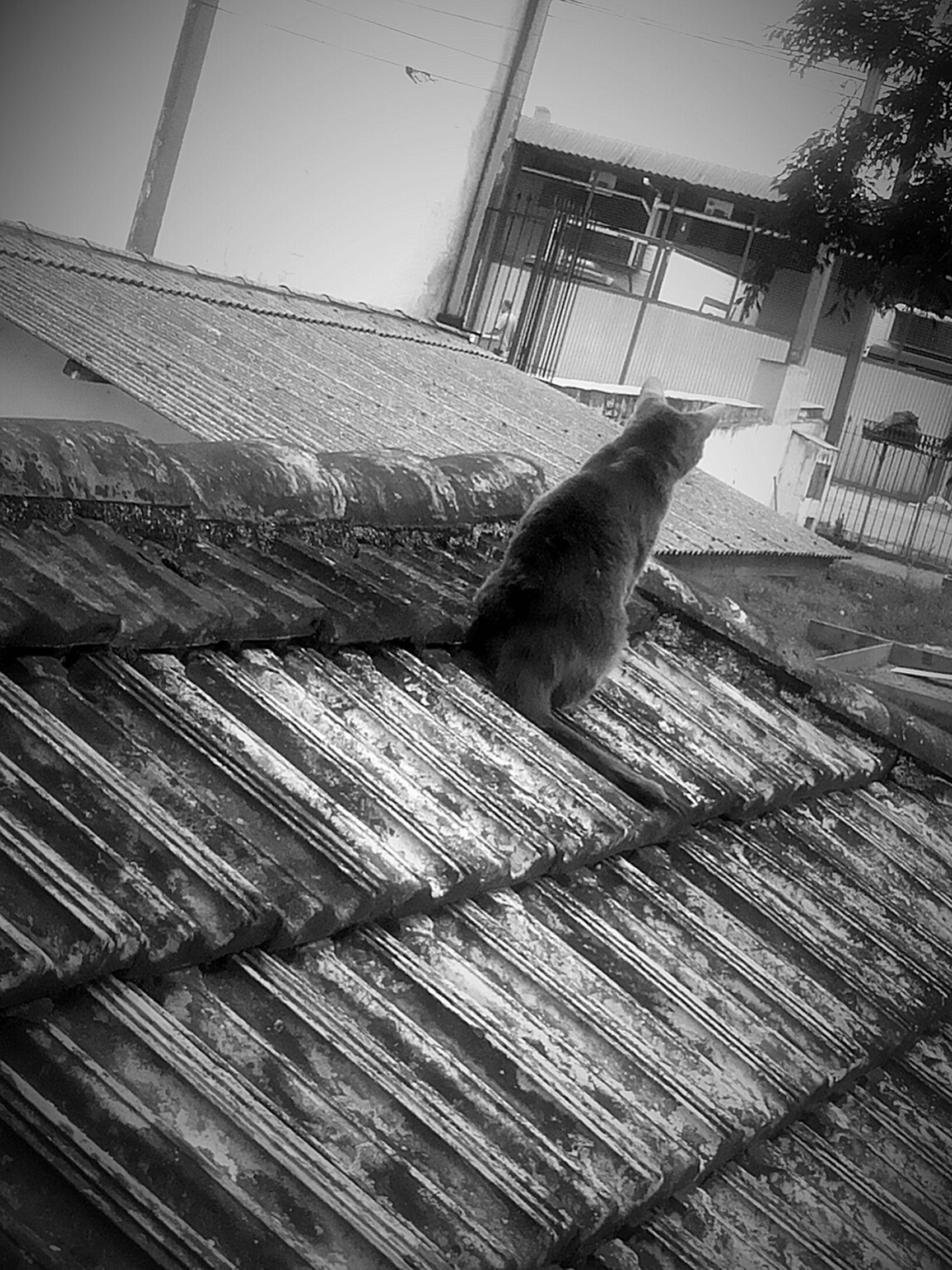 Fotografandoporai Gatos Gatos No Telhado Fotography Pensador