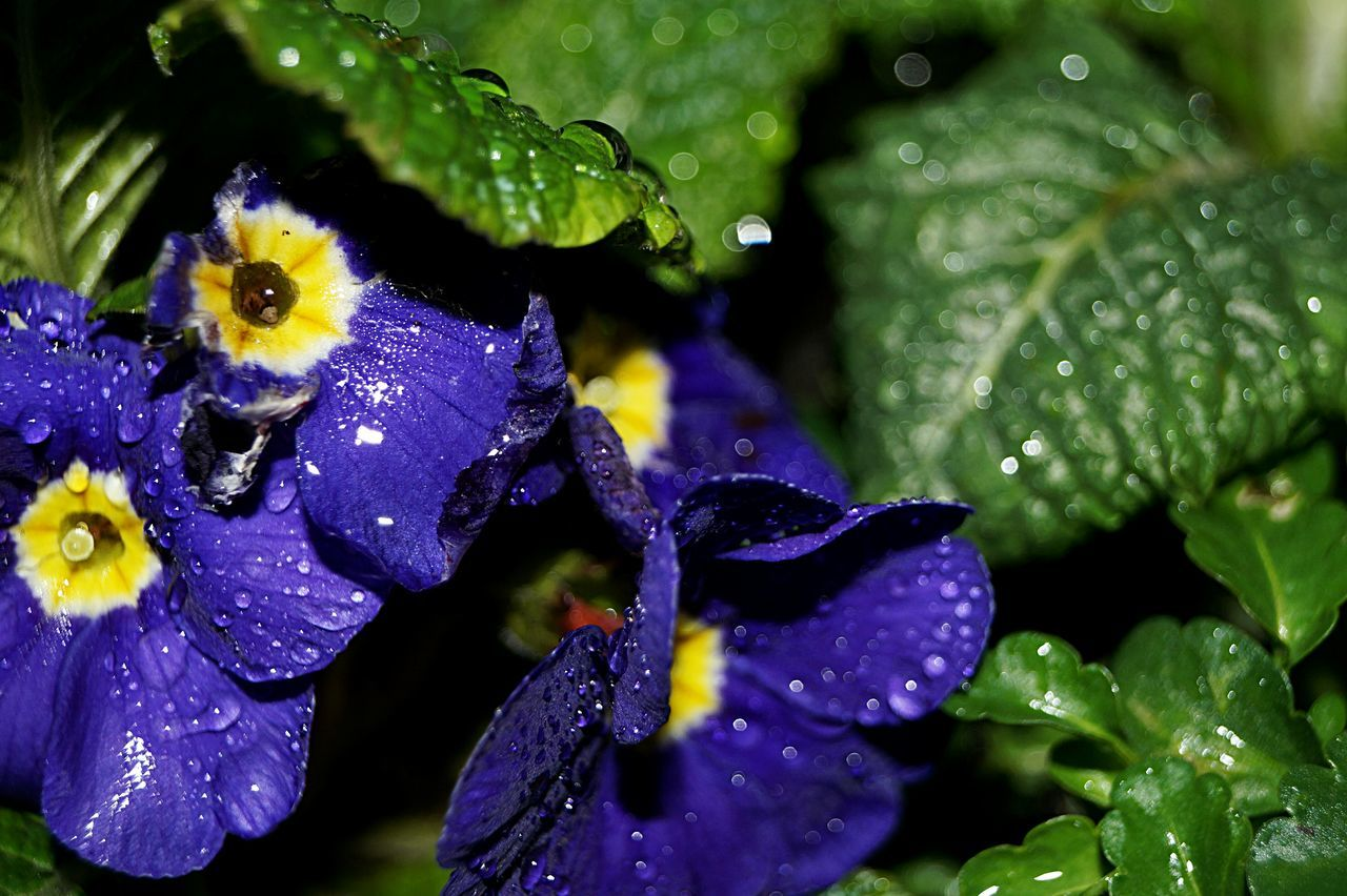 Nature Beauty In Nature Nature_collection Plant Growth Flower Fragility Freshness Leaf Flower Head Water Close-up Close Up Passion Flower Outdoors Outdoor Outside Lilac Lilac Flower Waterdrops Waterdrop Waterdroplets Drop Drops Spring