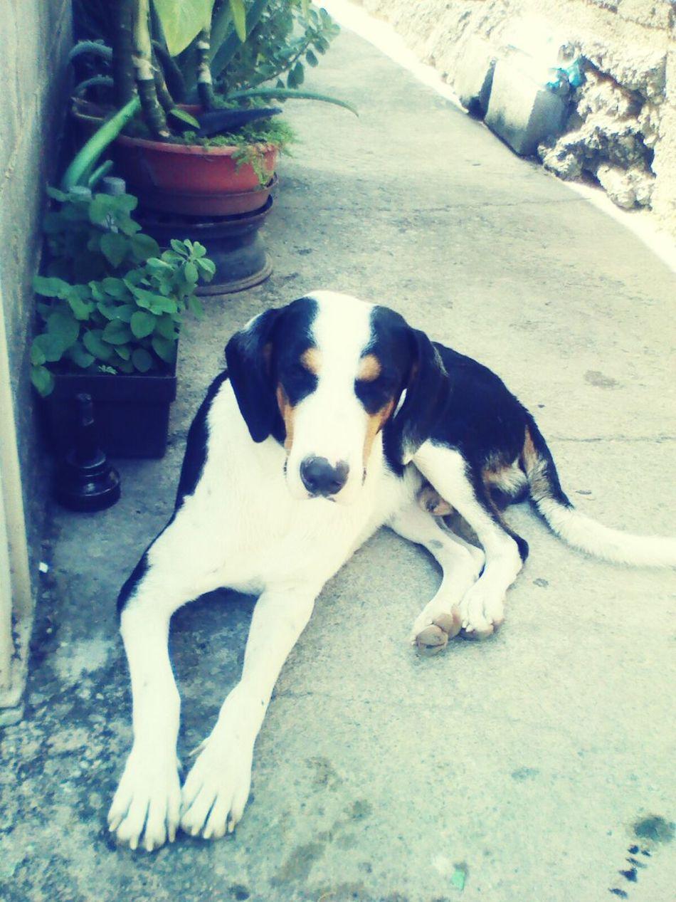 Dog Day One Animal Canine Love :) Canine Photography Animal Themes