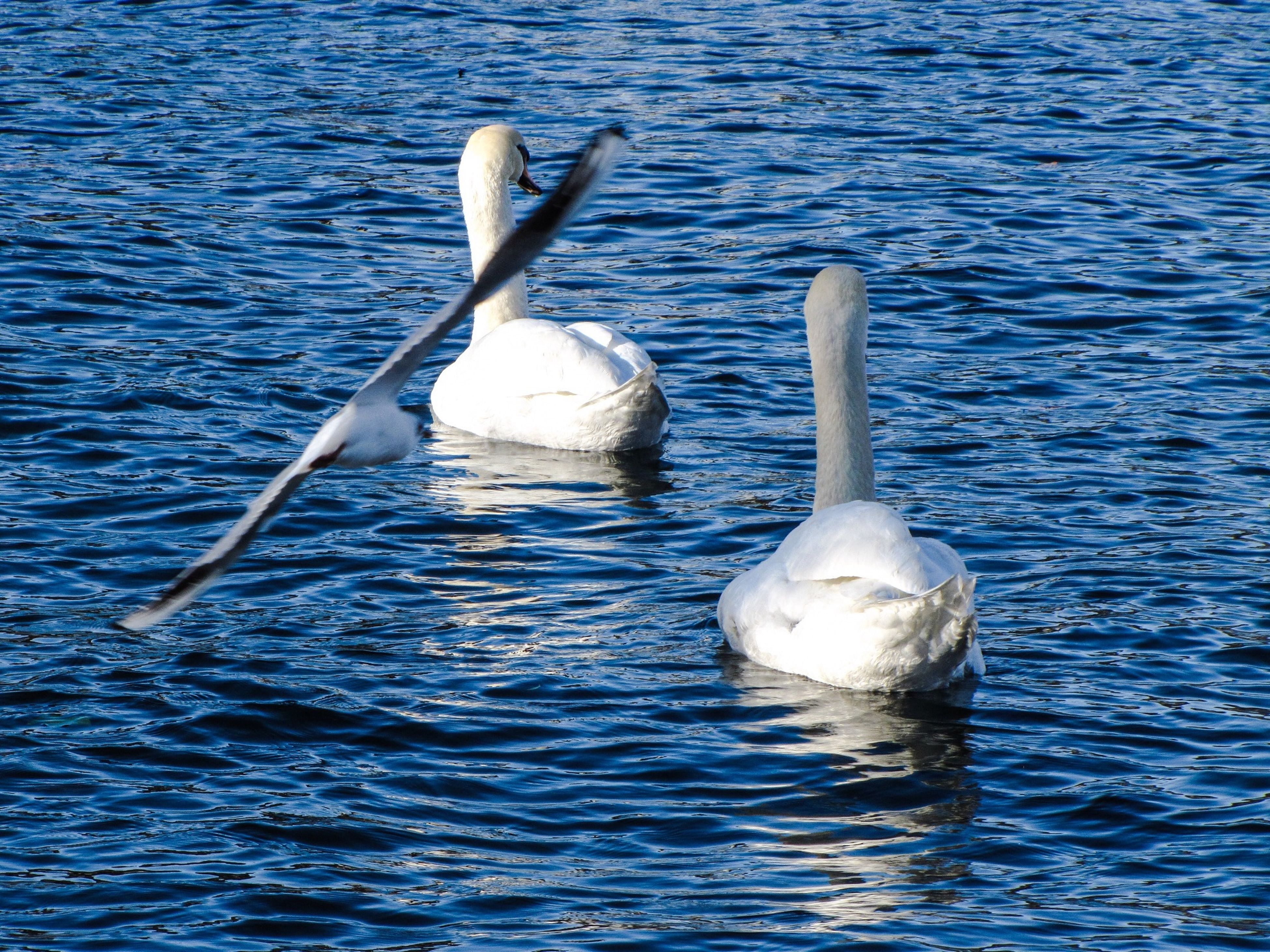 Dream on, dream on / There's nothing wrong / If you dream on, dream on / Of being a swan... Taking Photos Enjoying Life Hello World Popular Photos