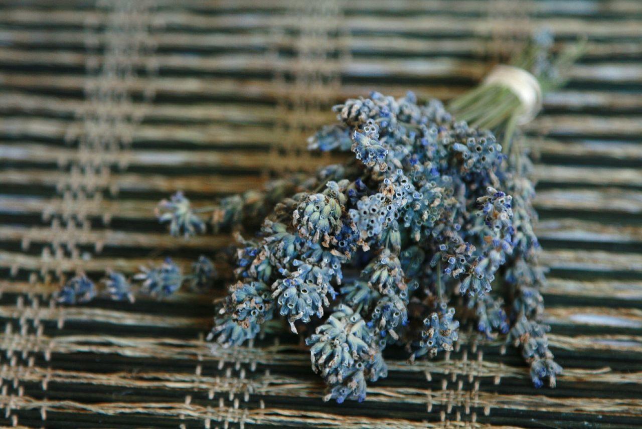 лаванда цветы аромат красота флора Природа Lavender Flowers Beauty Aroma Flora Nature
