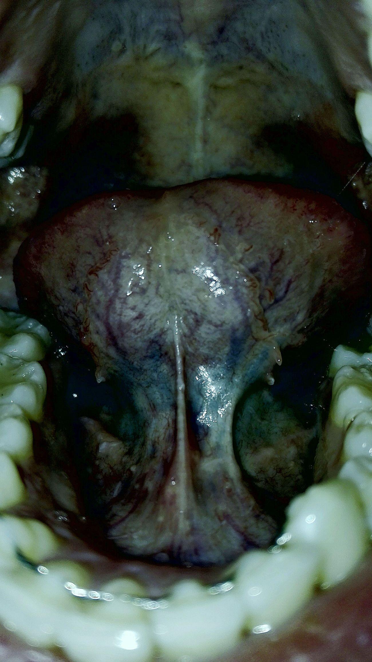 Il silenzio della ragione produce mostri Horror Mouth Poison Inside Delirio