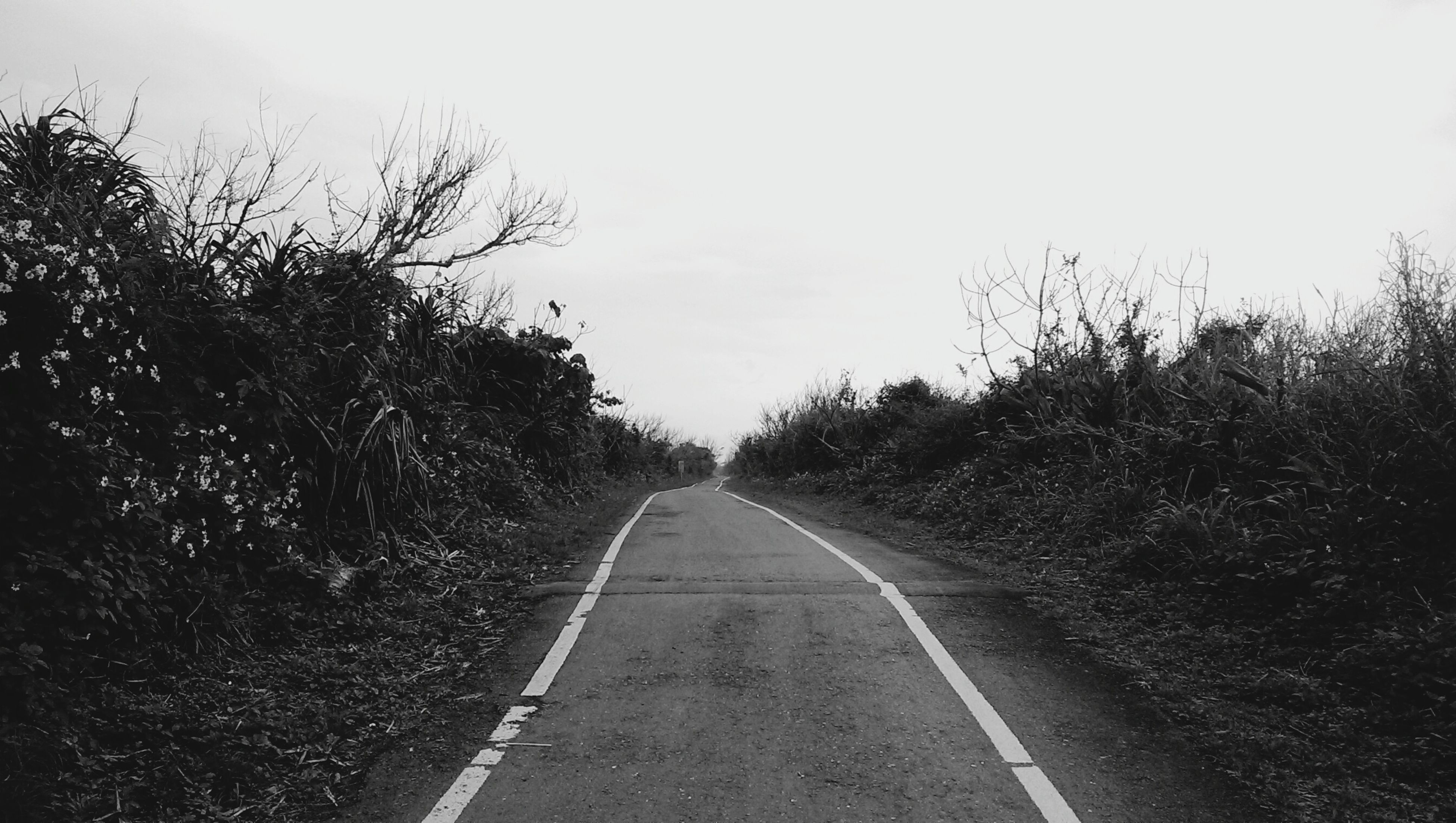 the way forward, diminishing perspective, vanishing point, transportation, road, road marking, tree, empty road, sky, clear sky, long, country road, empty, tranquility, tranquil scene, asphalt, nature, outdoors, no people, landscape