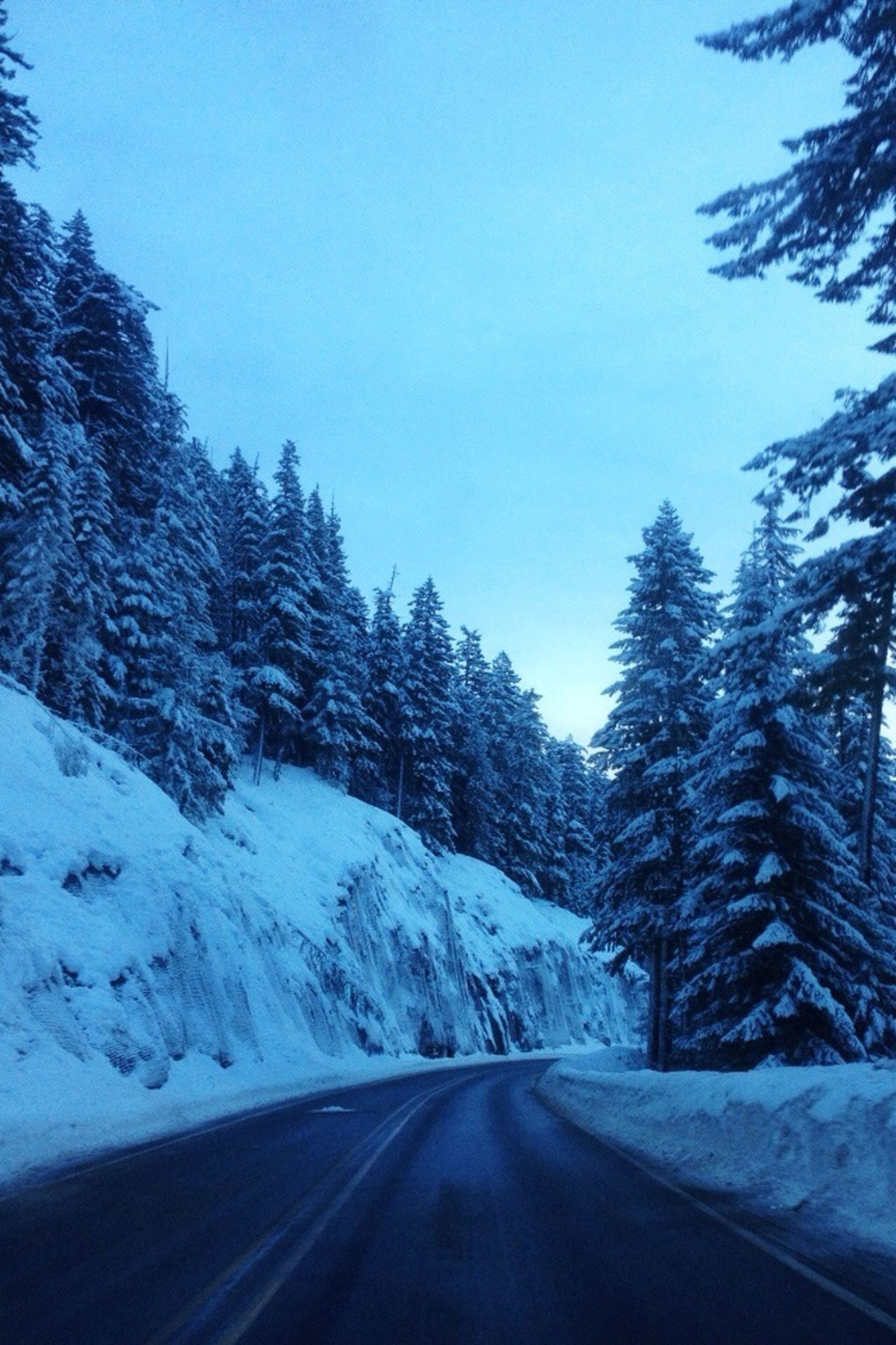 snow, winter, cold temperature, the way forward, season, road, clear sky, weather, tree, transportation, diminishing perspective, covering, tranquil scene, nature, tranquility, beauty in nature, vanishing point, scenics, blue, white color