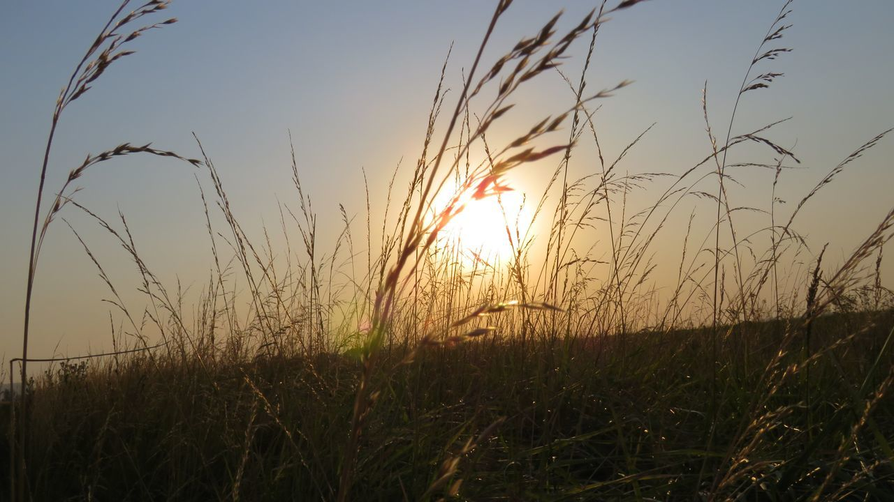 Balcarce, Argentina Beauty In Nature Buenos Aires, Argentina  Close-up Day Grass Growth Landscape Nature No People Outdoors Plant Scenics Silhouette Sky Sun Sunbeam Sunlight Sunset Tranquil Scene Tranquility