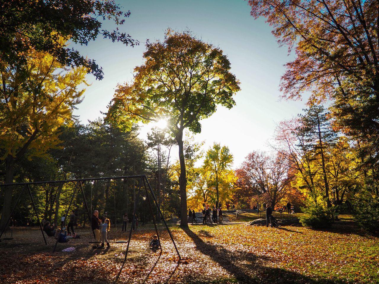 People Enjoying In Park During Autumn