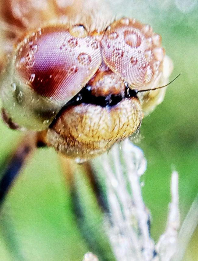 My Dragonfly Photo