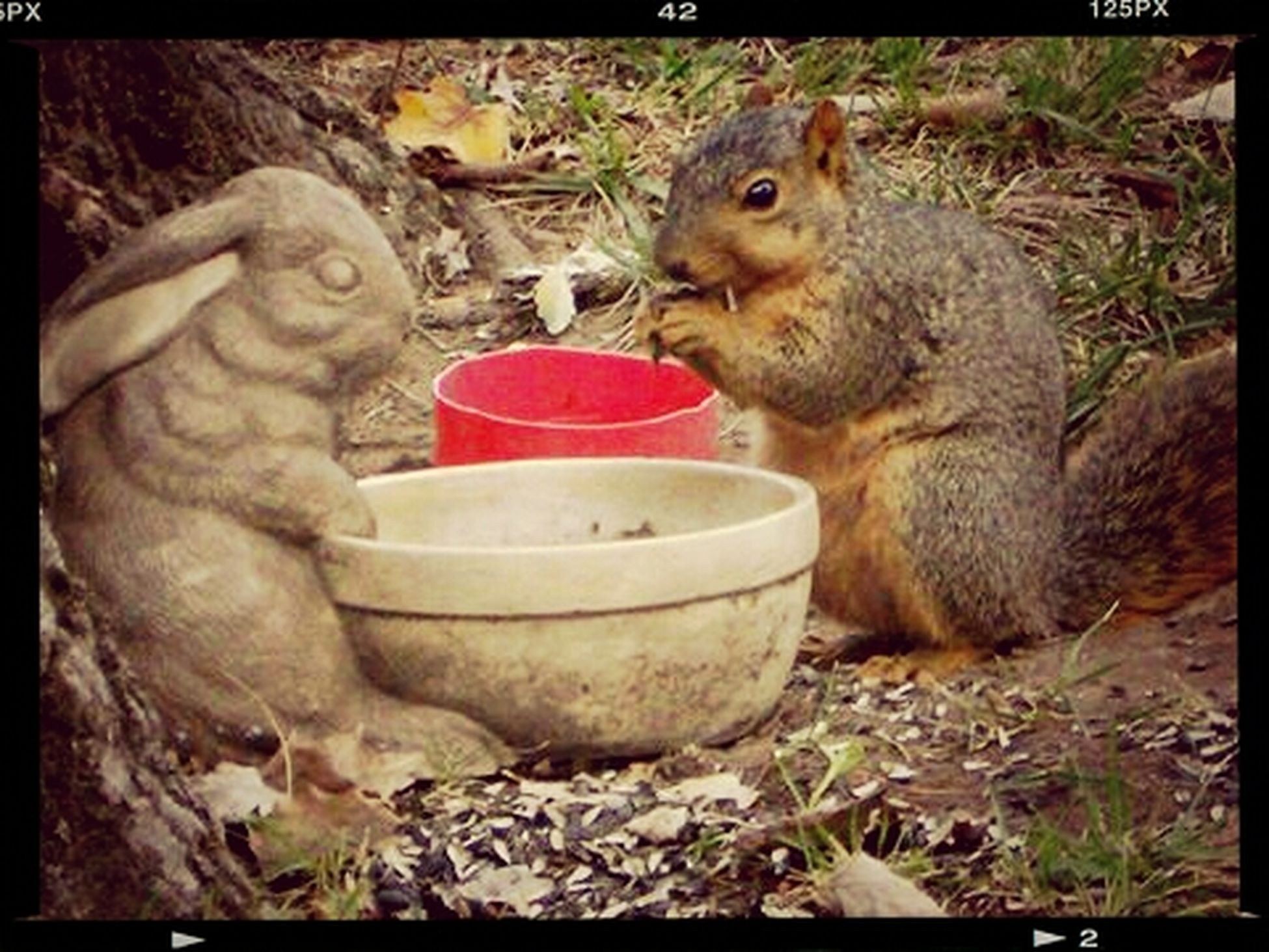 squirrel buddy... revisited